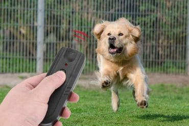 Отпугиватели собак на Алиэкспресс: 10 лучших ультразвуковых приборов