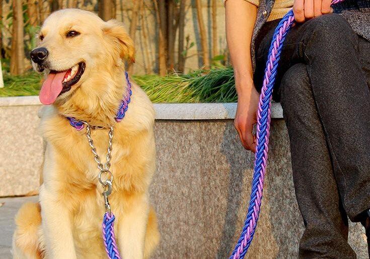 Ошейники для собак на Алиэкспресс: 10 лучших ошейников для всех пород