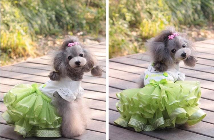 Красивое платье для собаки купить на Алиэкспресс