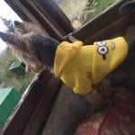 Одежда для собак на Алиэкспресс: 10 костюмов для маленьких собачек