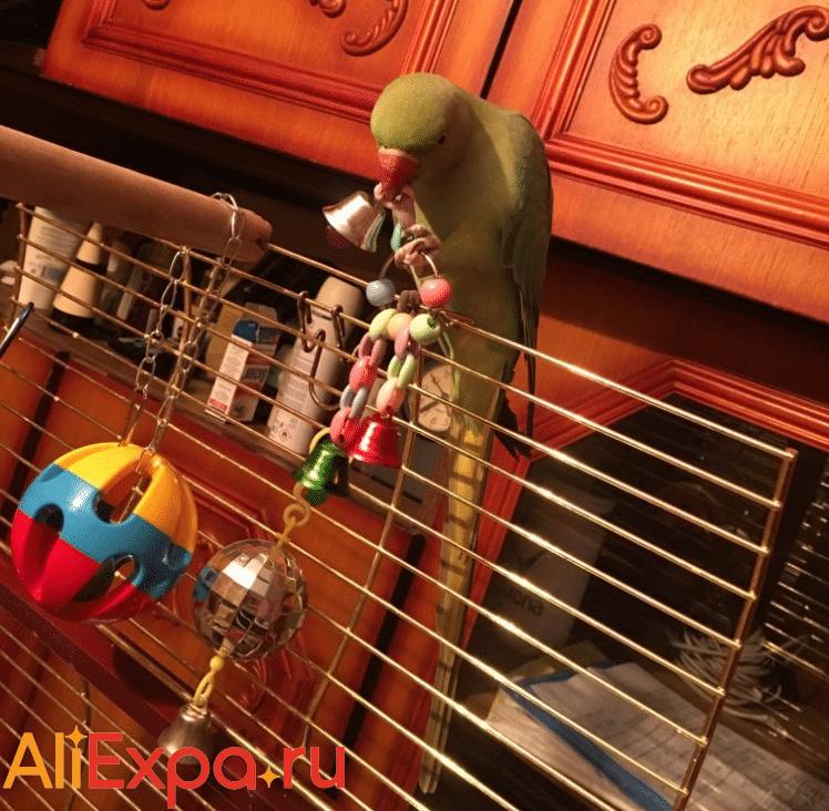 Игрушка с колокольчиками для попугая LAIMALA купить на Алиэкспресс